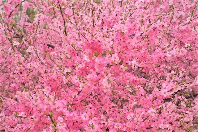 【桃花風水】風水で恋愛運アップするなら外せない!『桃花位』で春を呼び込もう♪