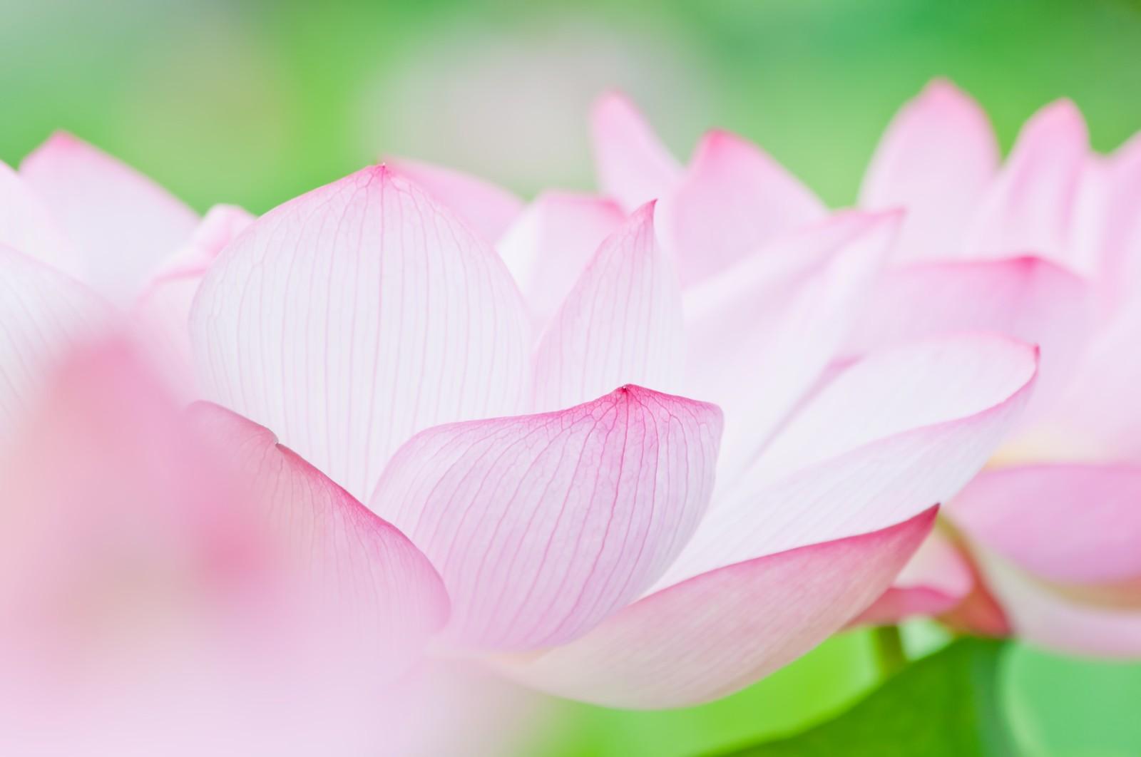 ほんのり甘いカルディの『蓮花茶』!美容にも良いと噂のベトナムのお茶です♪