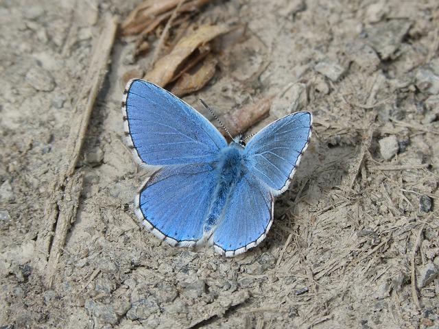 【ラッキーモチーフ】蝶は美しさや変化の象徴♪遭遇はスピリチュアルなメッセージ!
